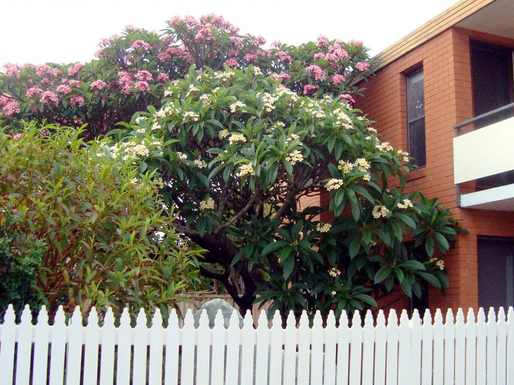 1/36 Jabiru Street Bellara, QLD 4507