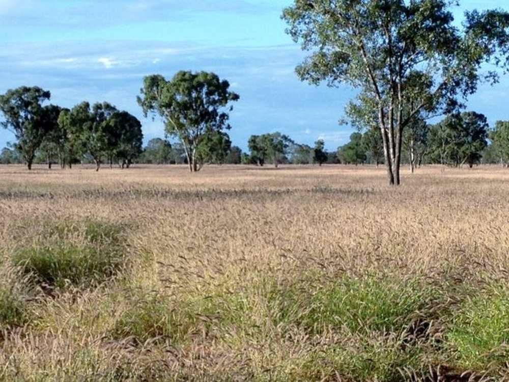 0 Part 'Bethelen' Thallon, QLD 4497