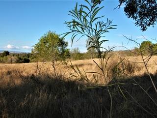 437-477 Rosewood Marburg Rd Tallegalla , QLD, 4340