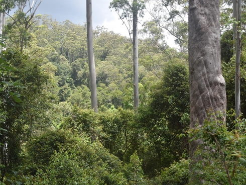 170-170a Lower Bobo Road Ulong, NSW 2450